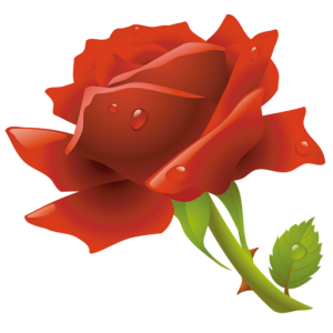 red-rose-icon-1328
